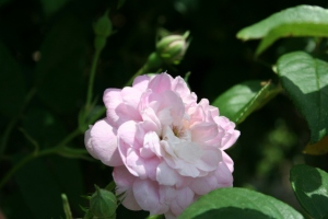 Botanical Gardens 003